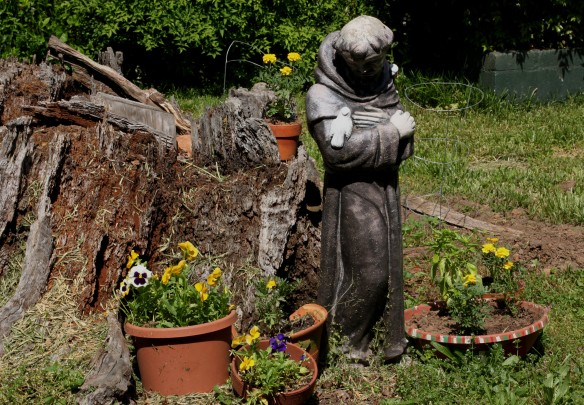 Saint Francis keeping watch over the pansies and marigolds.  The tomato plants are behind the stump.
